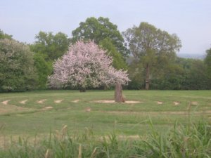 Summer Solstice & Walking the Labyrinth